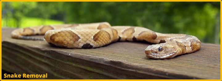 SnakeSlide